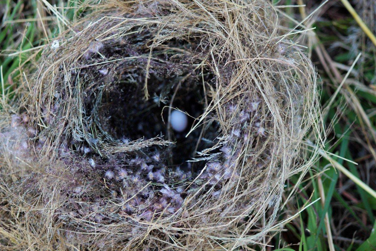 фото картинки гнезда птиц очень