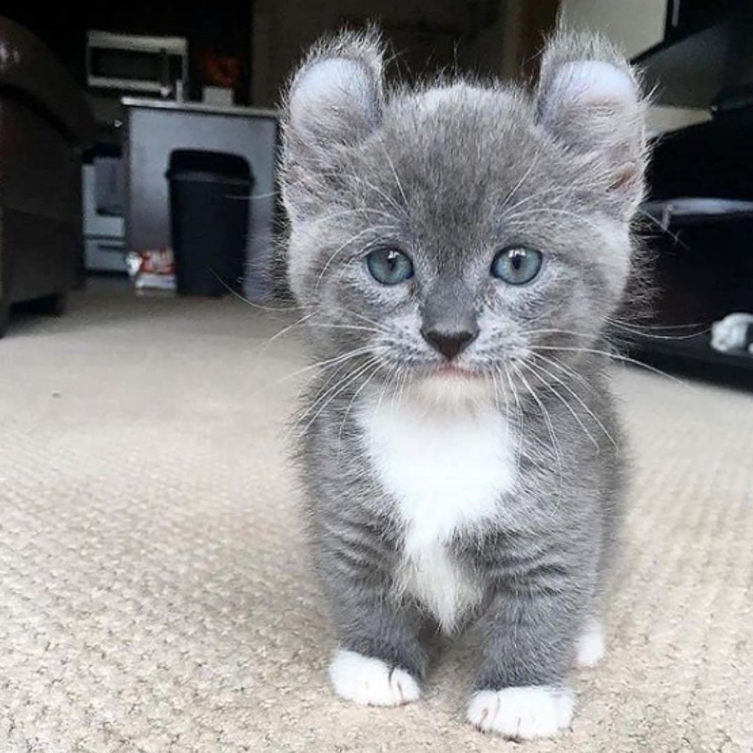 этот чарующий покажи фотографии кошек и сколько они стоят знают