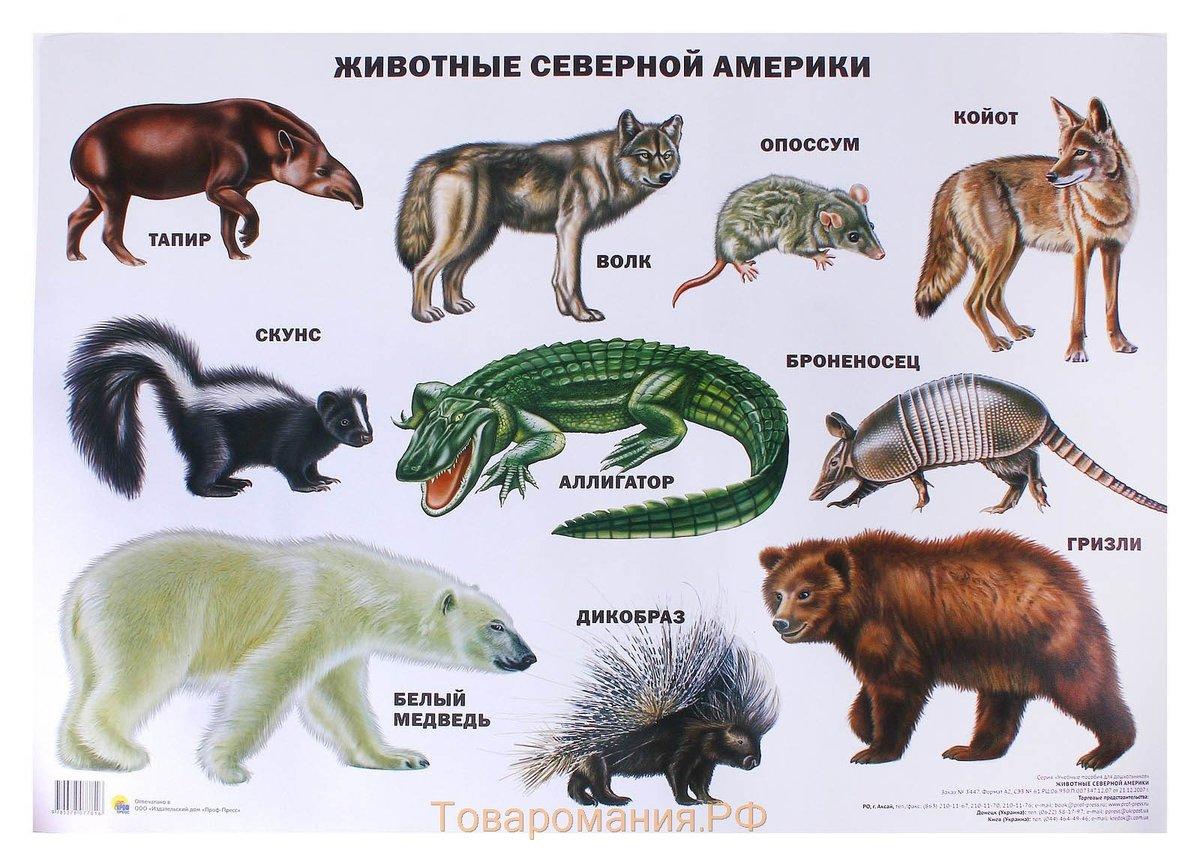 Северная америка картинки животный мир группа