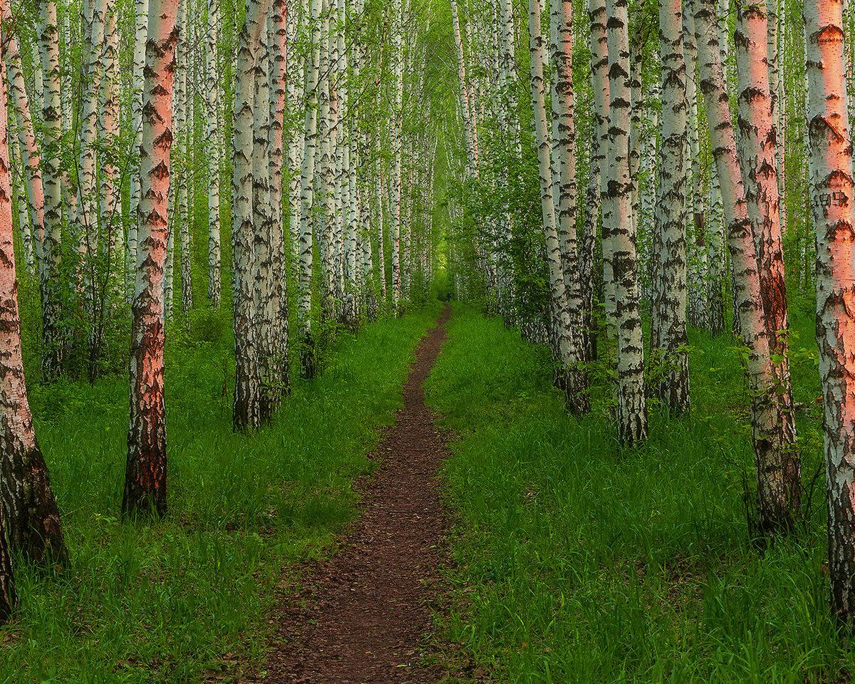 нужно картинки для стола русский лес картинок столько