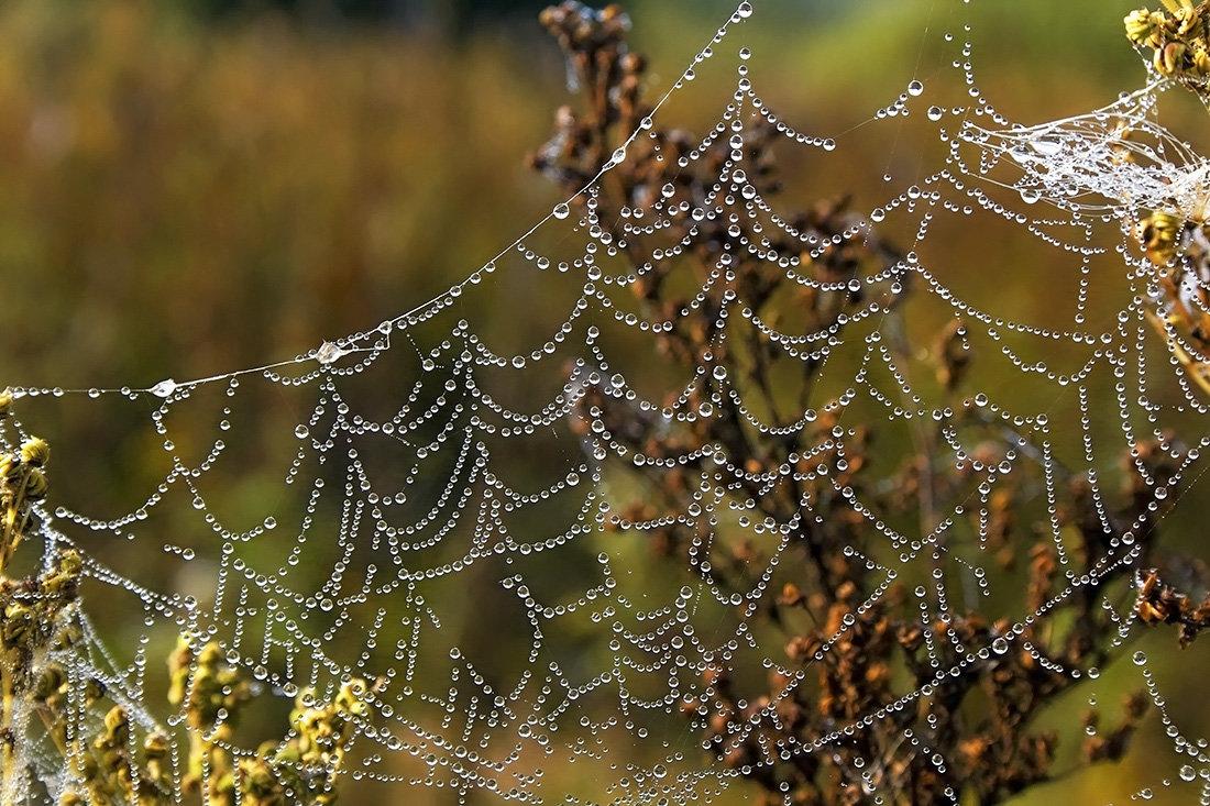 визуально зону картинки роса на паутинках макро данном сюжете