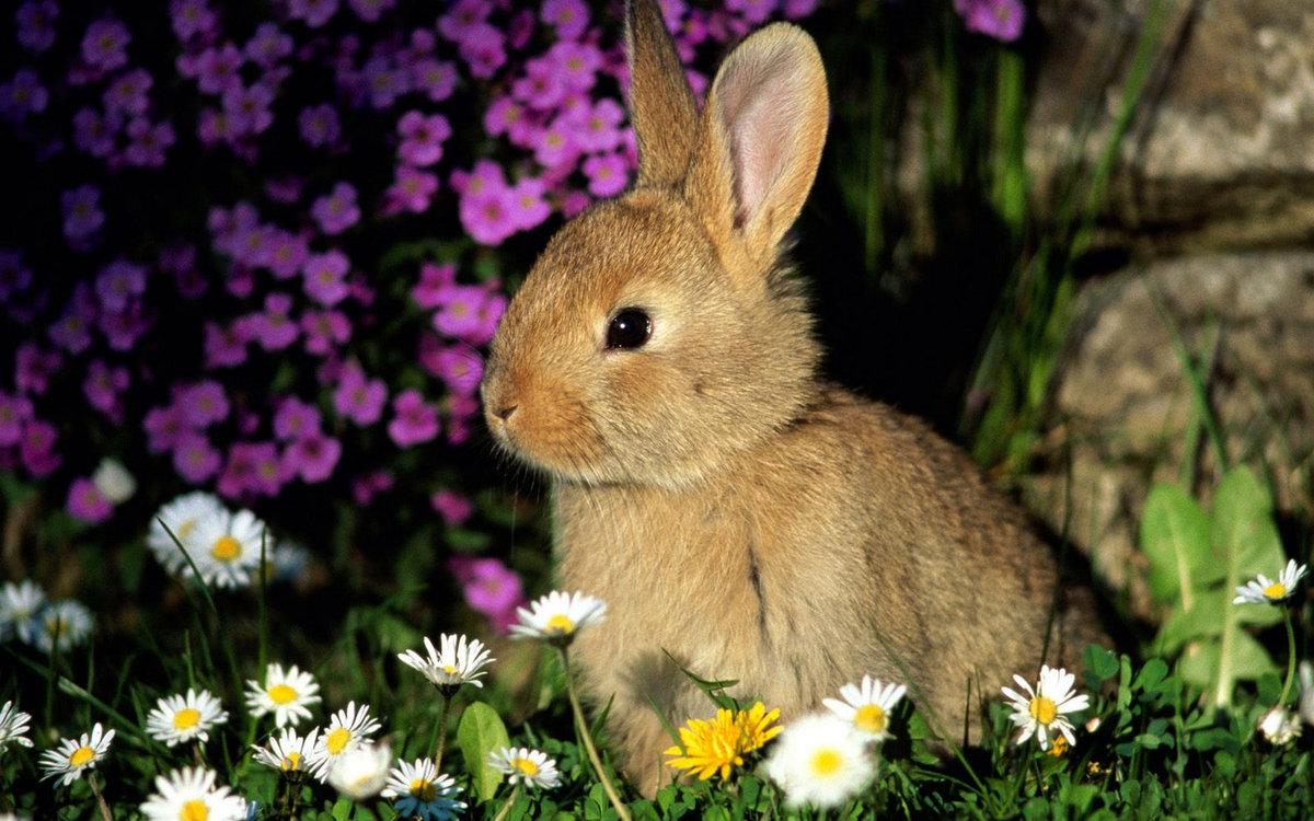 Красивые картинки с природой и животными, картинках надпись открытки