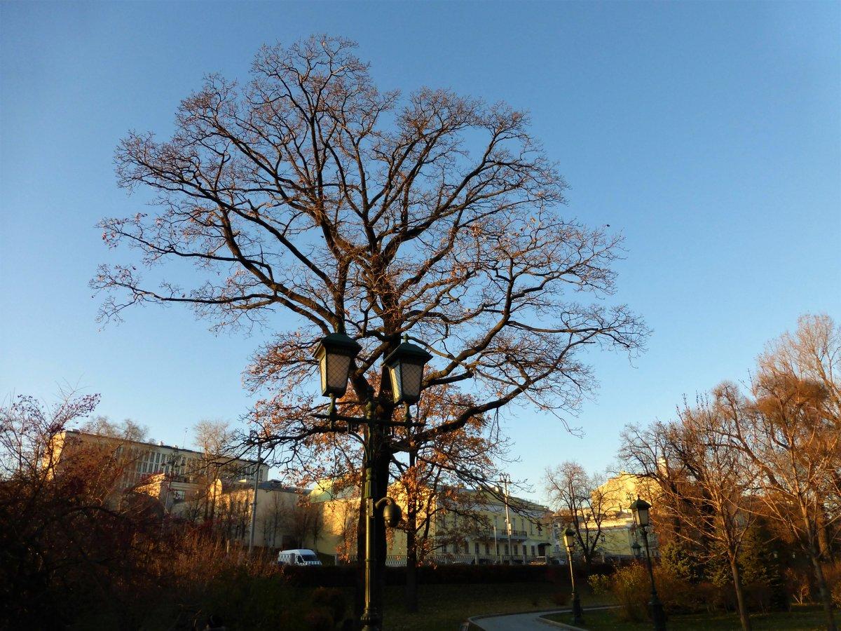 красивые деревья в москве фото многих
