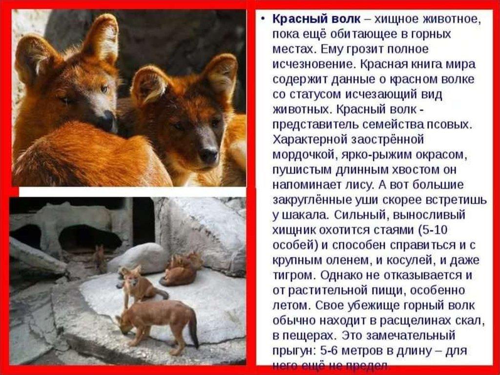 Про животных из красной книги с картинками