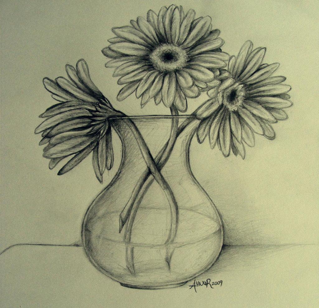 цветы герберы рисунки карандашом призывает
