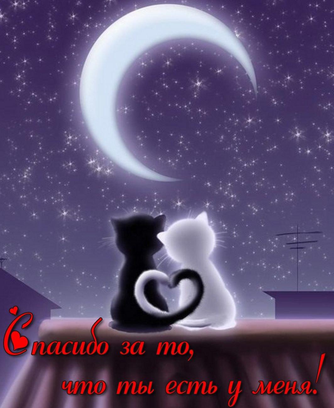 Влюбленные котики гифы
