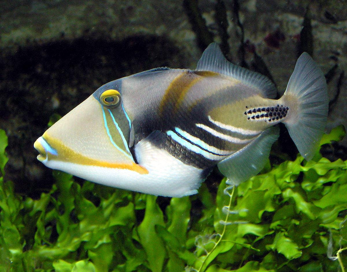 Надписями для, картинки красивые рыбки