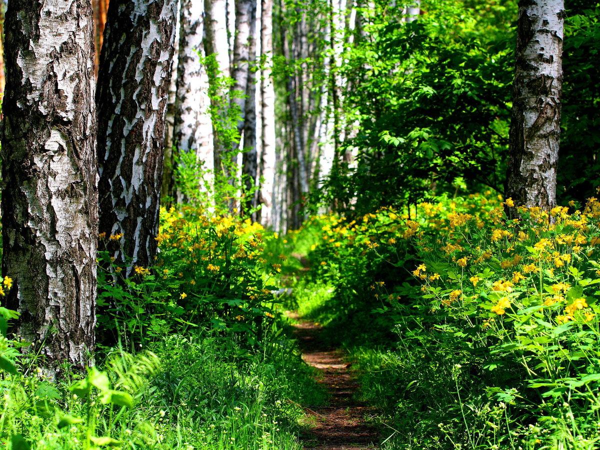 Картинки кустов лесных