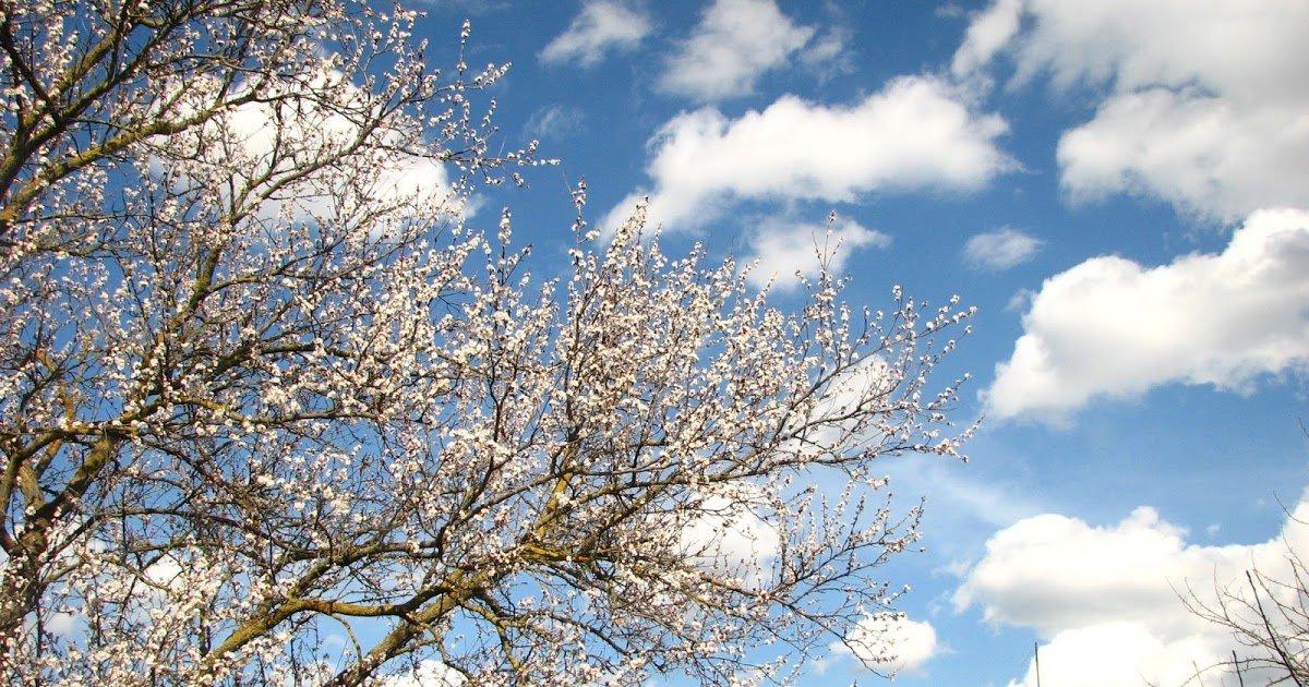 Весенние небеса картинки