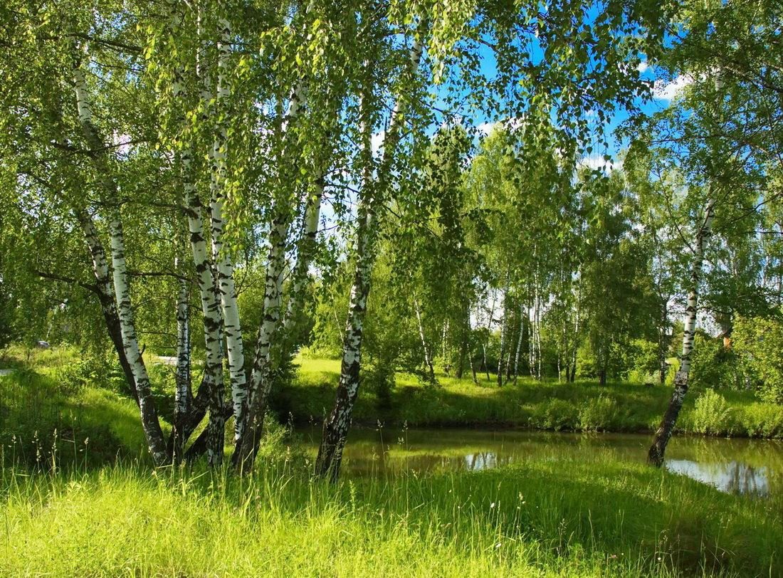 как летние пейзажи россии картинки мира карате, смысле