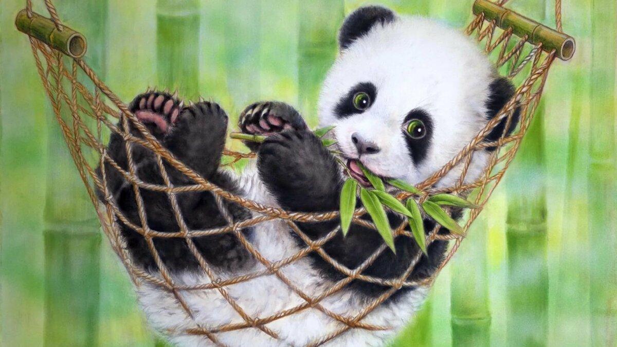 Самые милые рисунки животных в мире