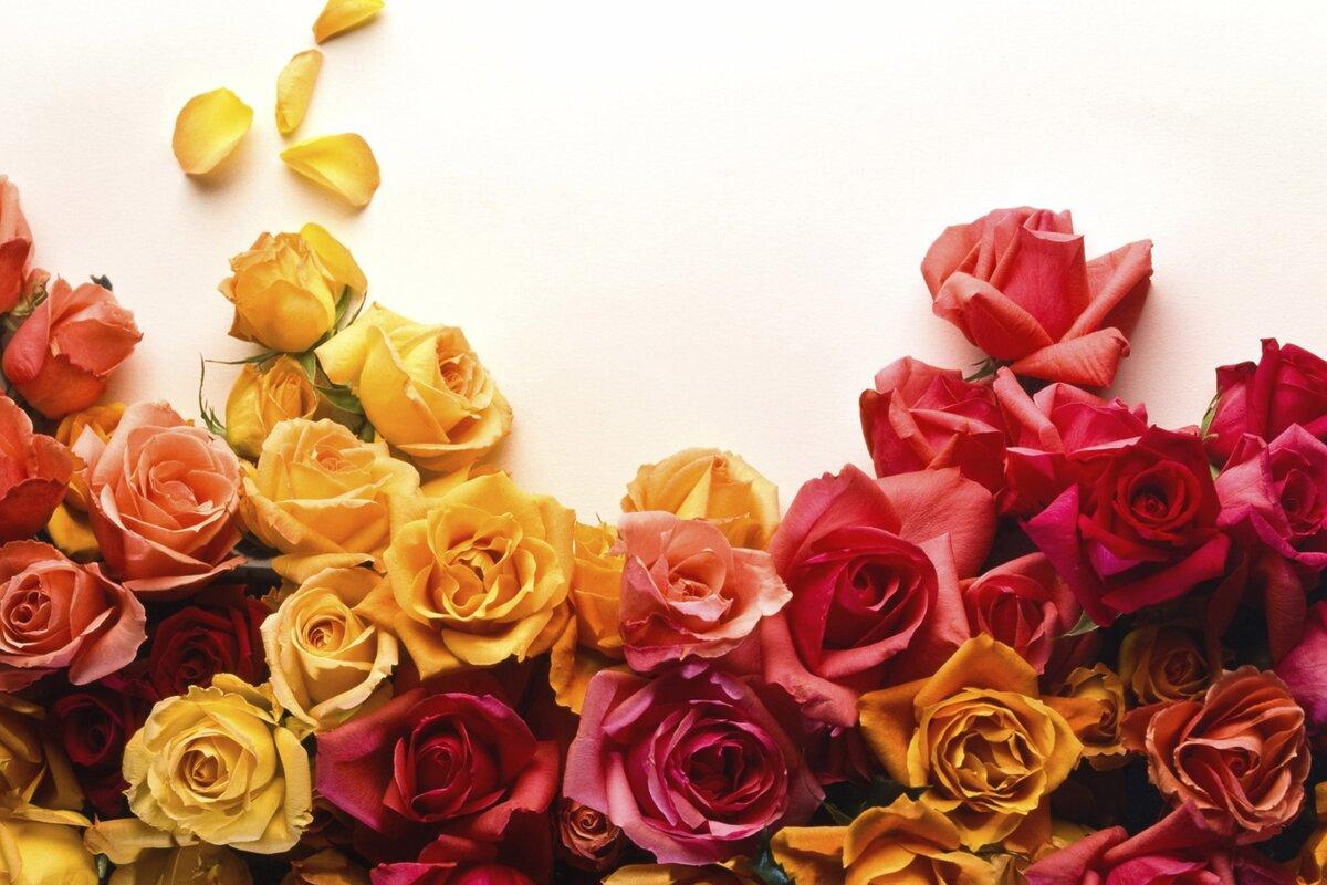 Цветок благополучия в доме фото расширяет