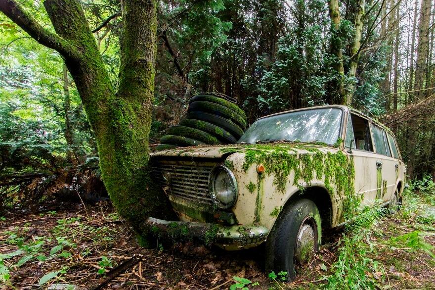 машина в лесу картинка для можно увидеть