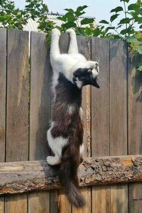 Любимый Кот: