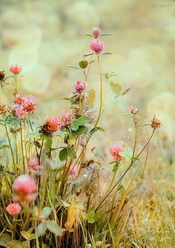 Картинки анимация полевых цветов, прикольных кошек
