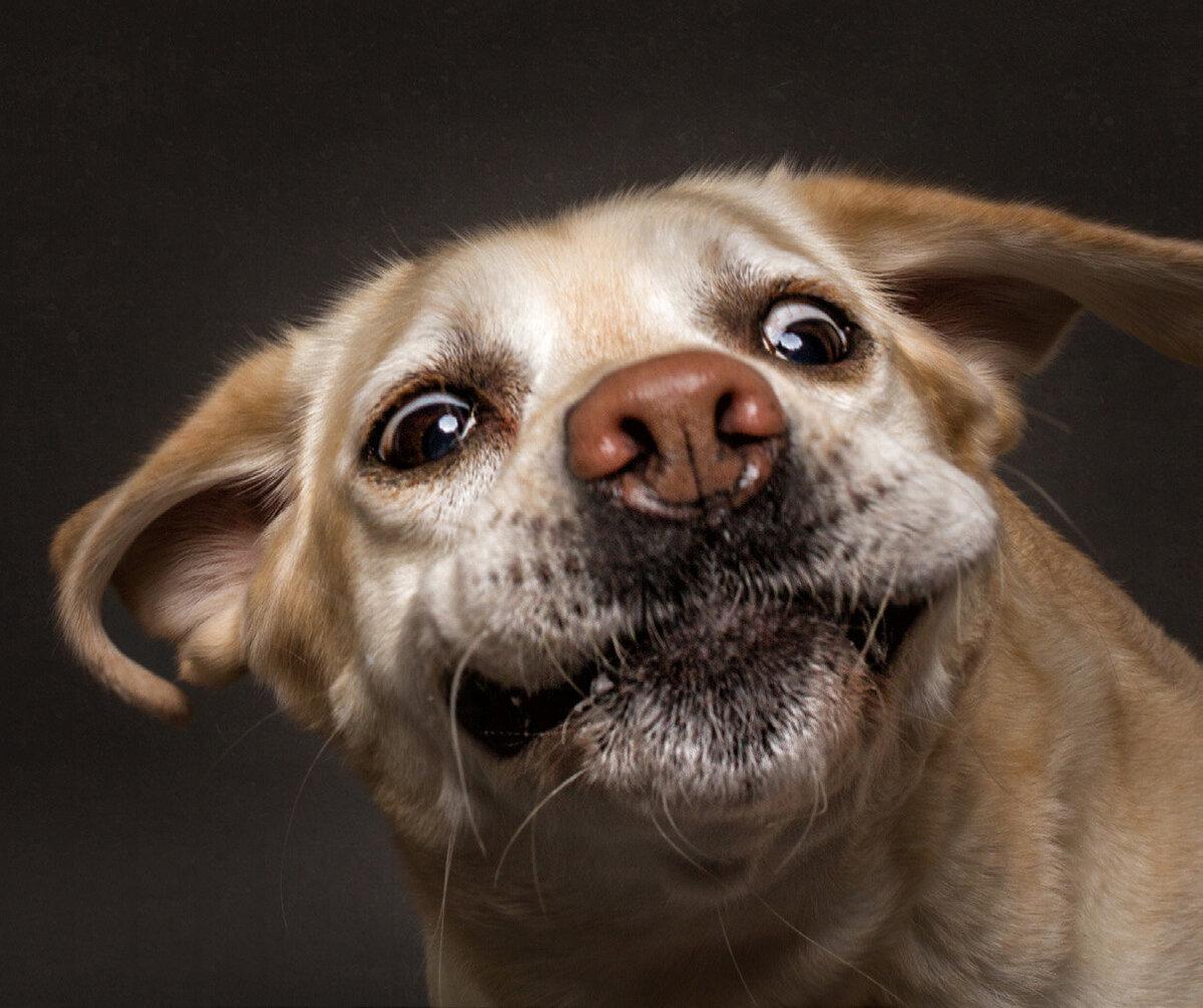 Смешные собаки картинки смотреть онлайн