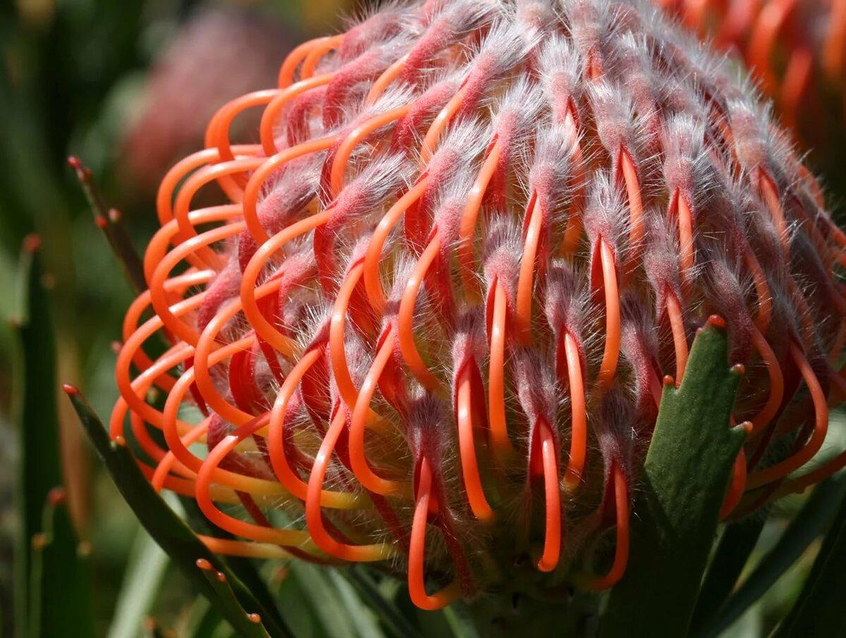 экзотические цветы и из название в картинках человек является малознакомым