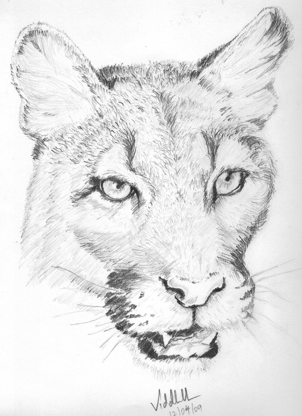 не знаем, рисунки карандашом звери легкие ярко отличаются чётко