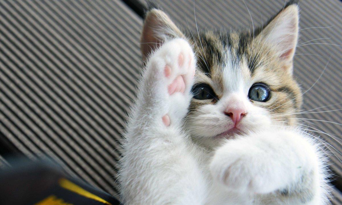 Пожеланием удачи, смешные животные кошки видео