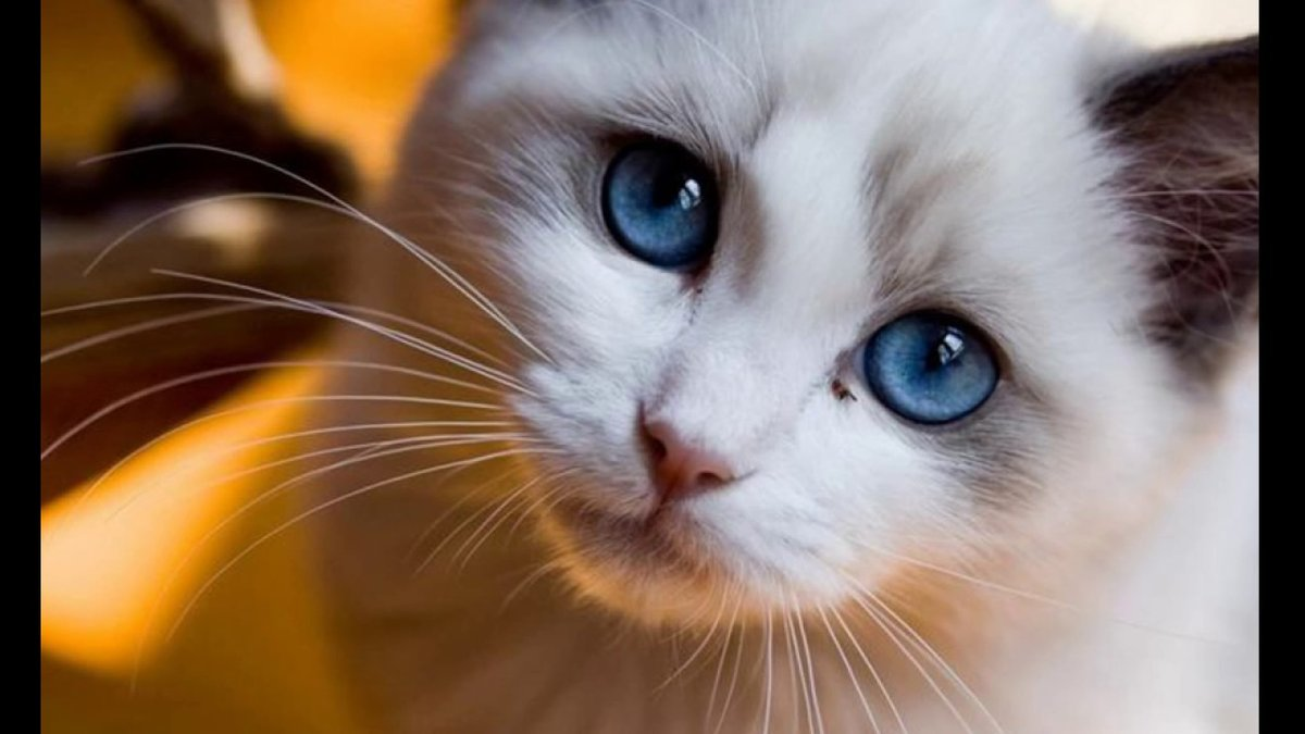 говорить картинка с грустными глазами котенка именно то