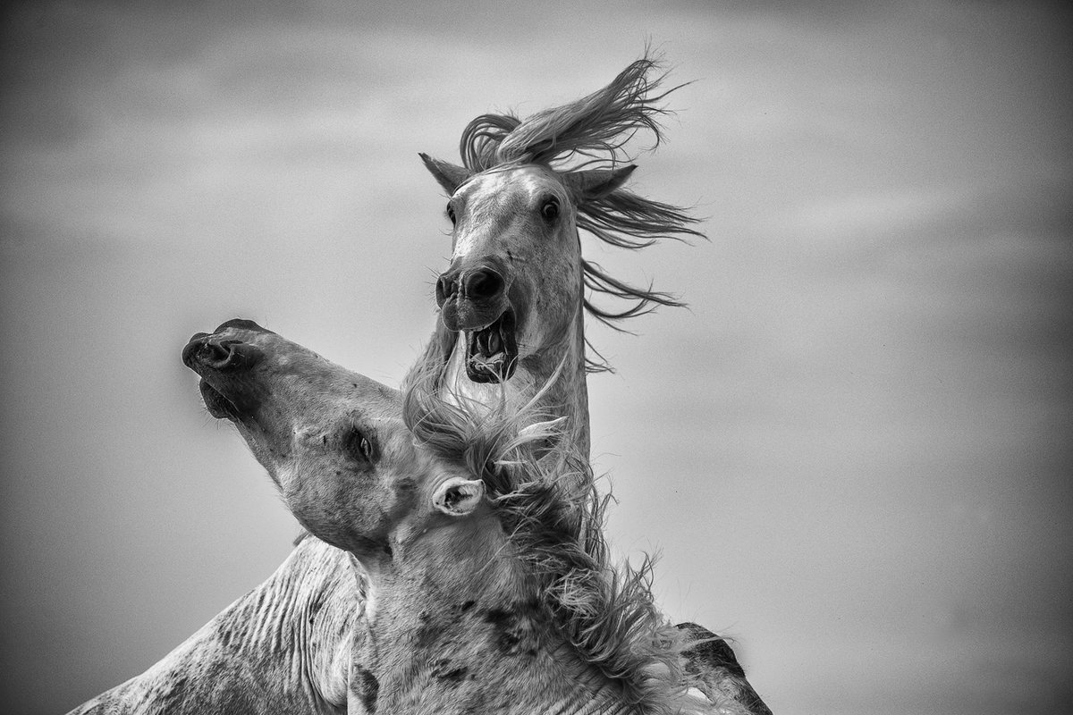 лучшие черно белые фото животных домашних