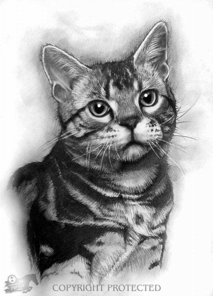 Картинки с кошками нарисованные