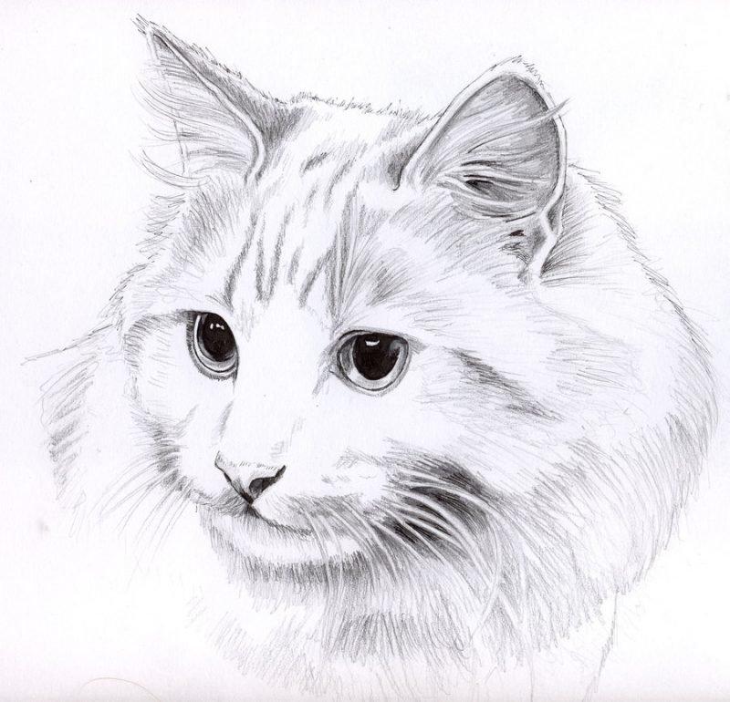 Картинка для срисовки карандашом