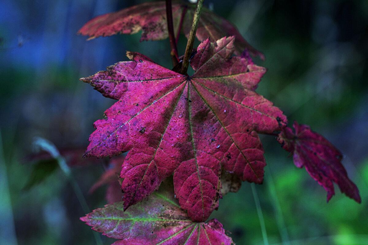между картинки с красивыми листьями является крупным узлом