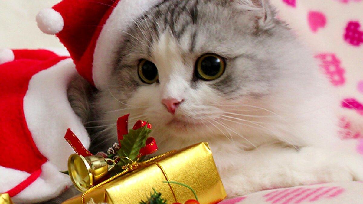 Дети, новогодние картинки с котами на рабочий стол