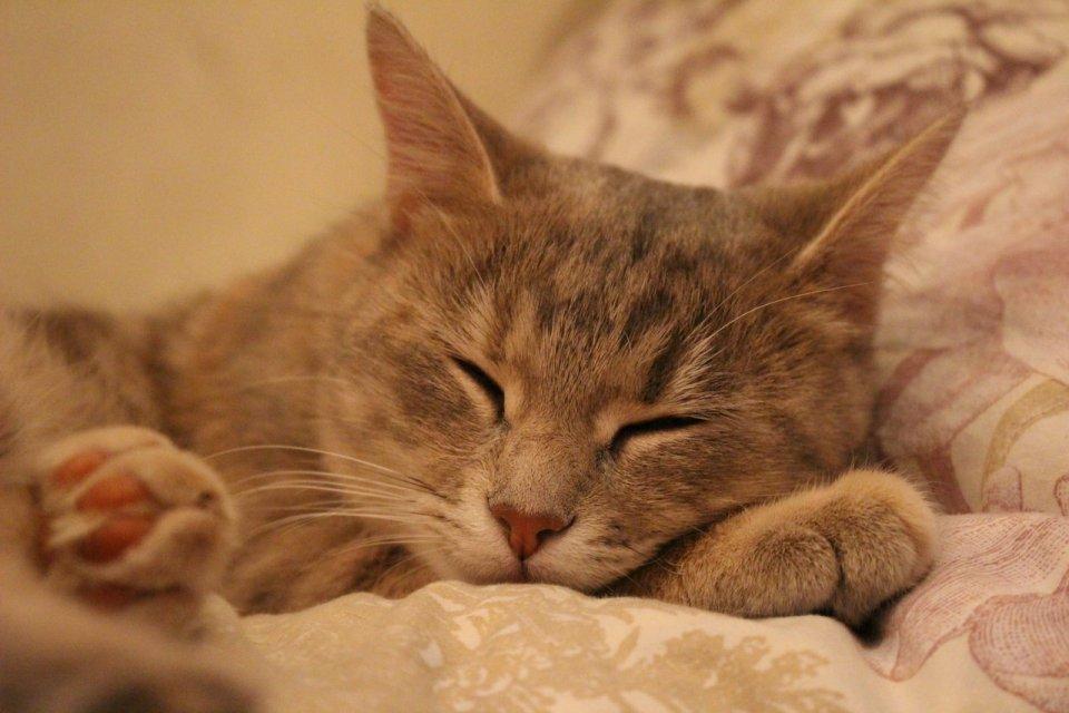 Новорожденным, картинки спящие котики