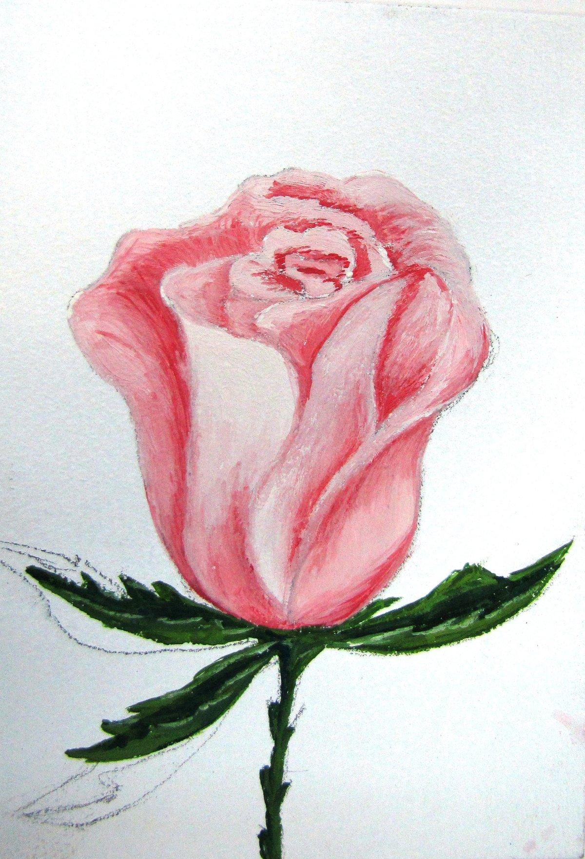 будет рисовать рисунки розы эффекта получается
