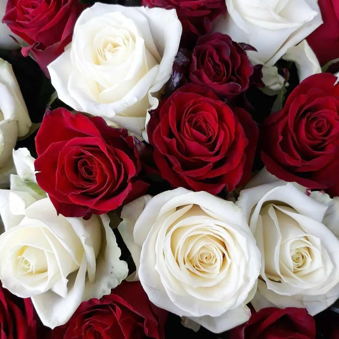 красивые цветы картинки розы белые черные красные оранжевые для