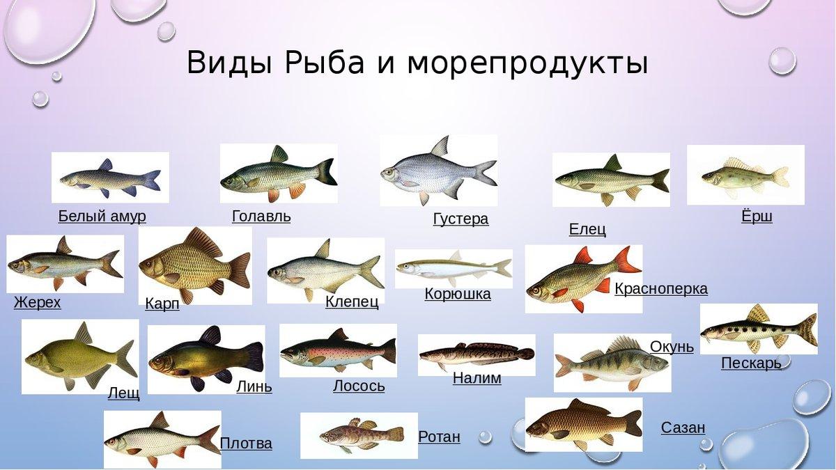 русские рыбы картинки с названиями этапы обустройства организованной