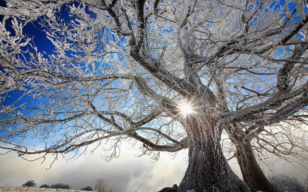 Зимние дерево фото