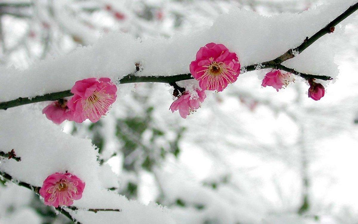 Картинки цветы в снегу, машине прикольные