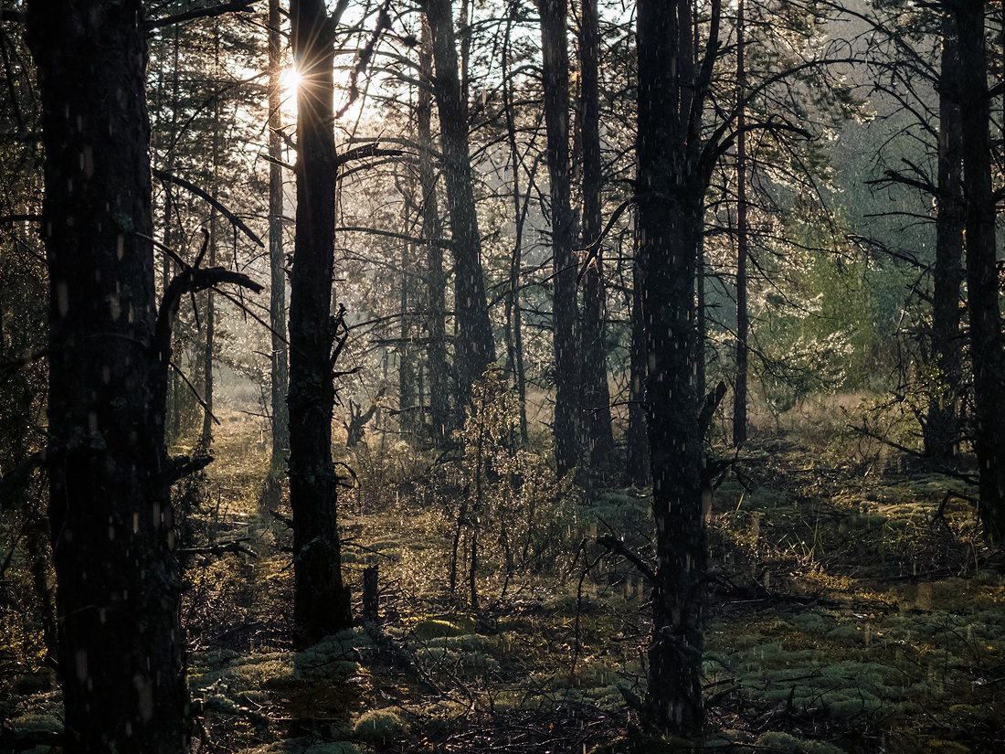 фото дождливого леса только