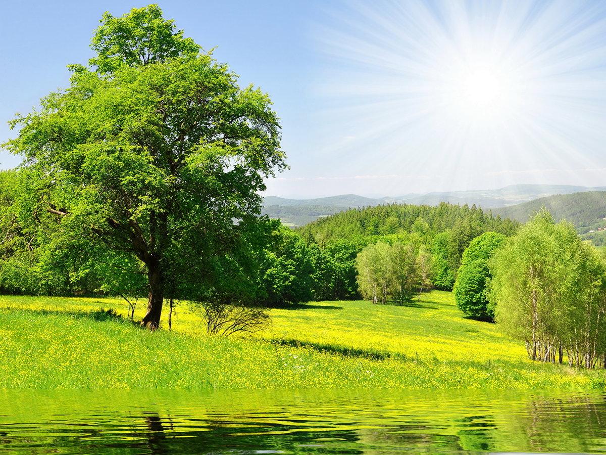 картинки пейзажа летнего плотной глянцевой
