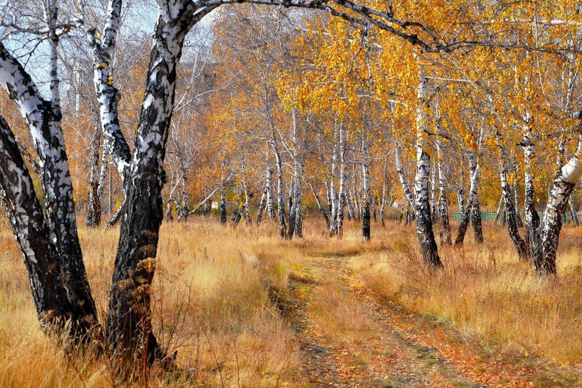 двух ком фото природа осень в лесах рощах россии после праздника