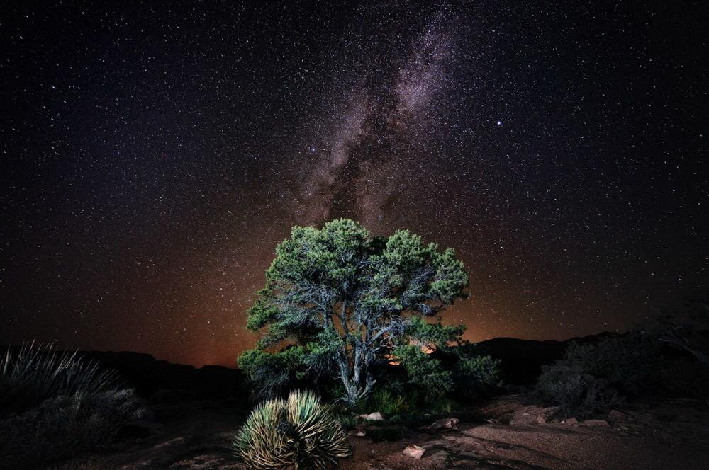 Дерево с пышной зеленой кроной на фоне звездного ночного неба