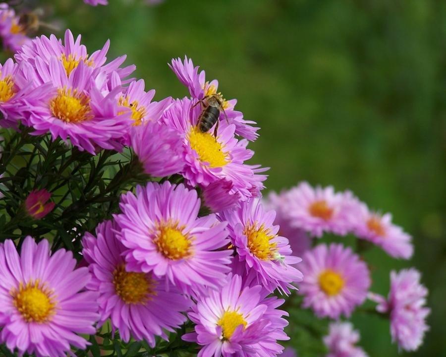 Приглашение, красивые картинки осенние цветы