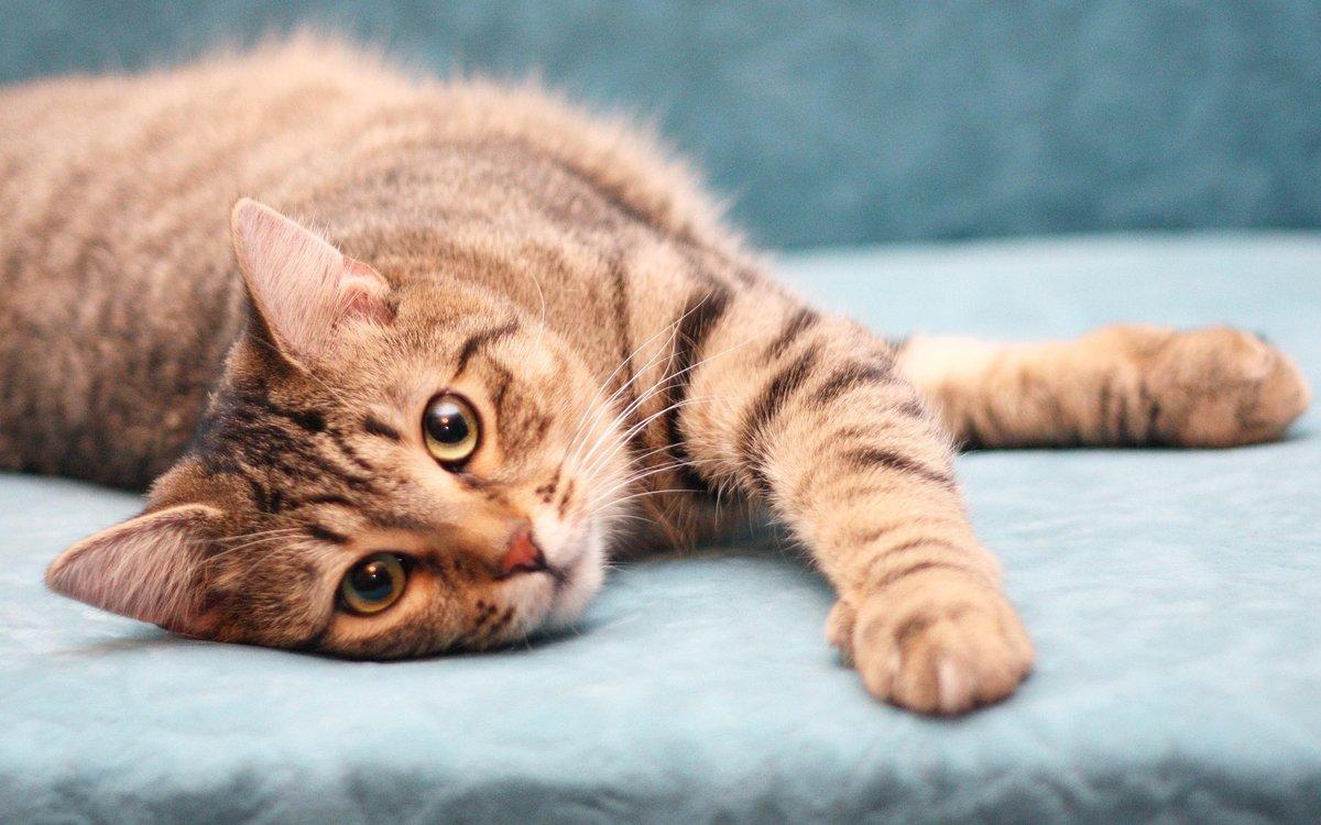 кошки подборка картинки площадки для спорта