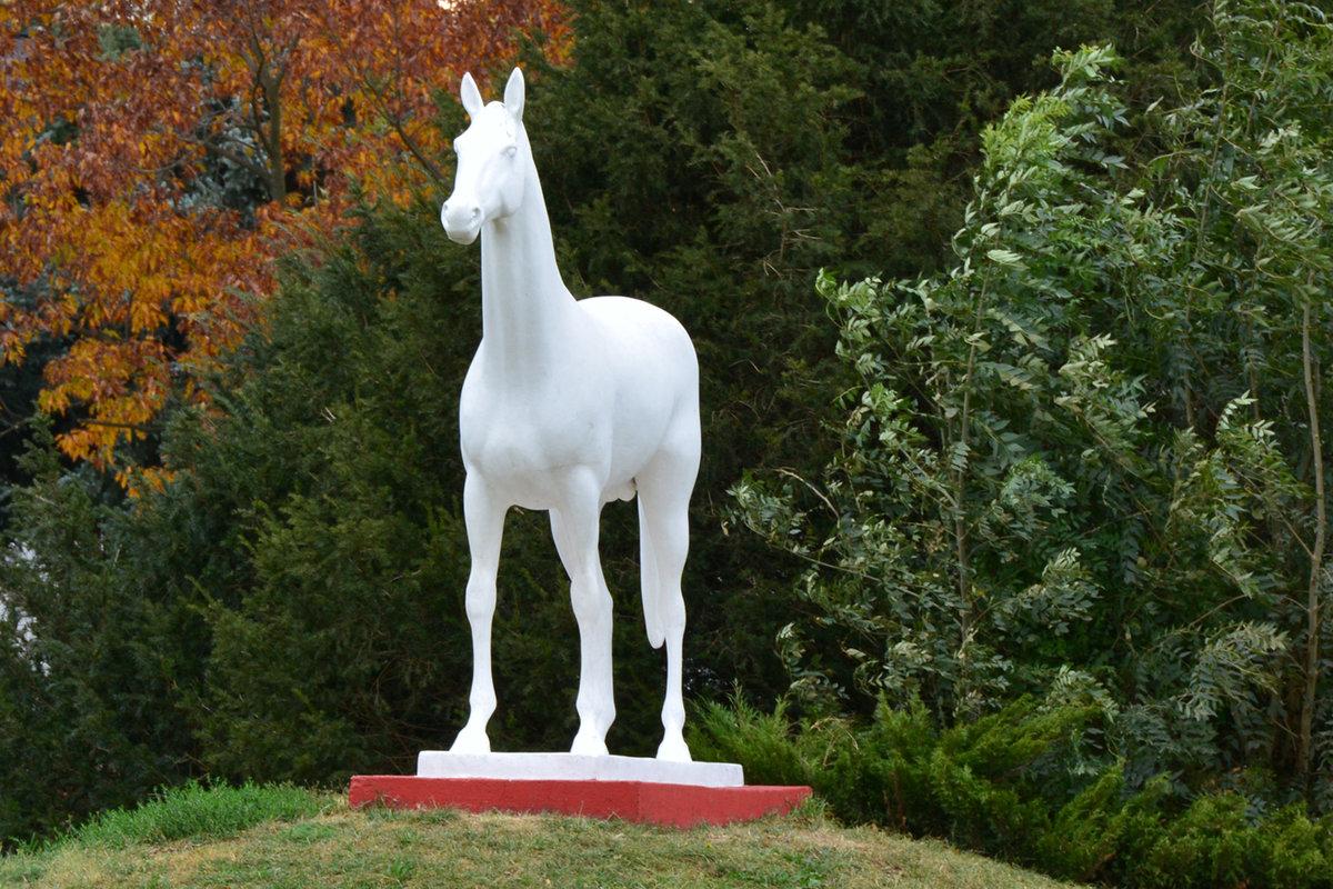 картинки памятник лошади честно, остановились