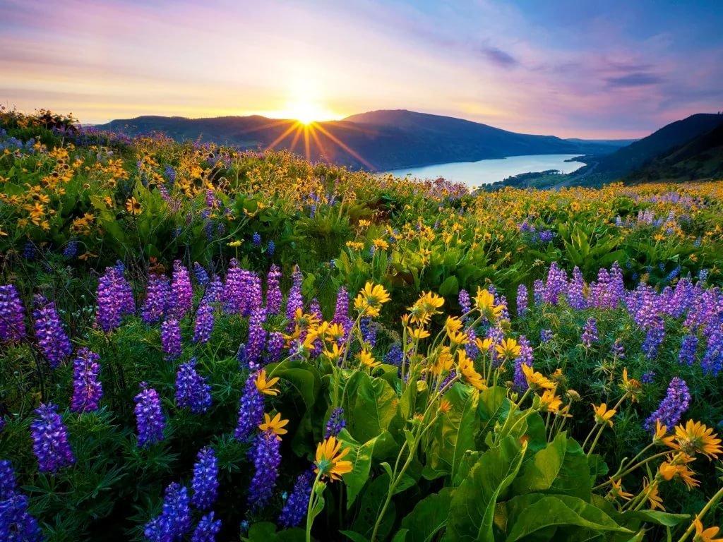 Погладь, картинки утро природа красота