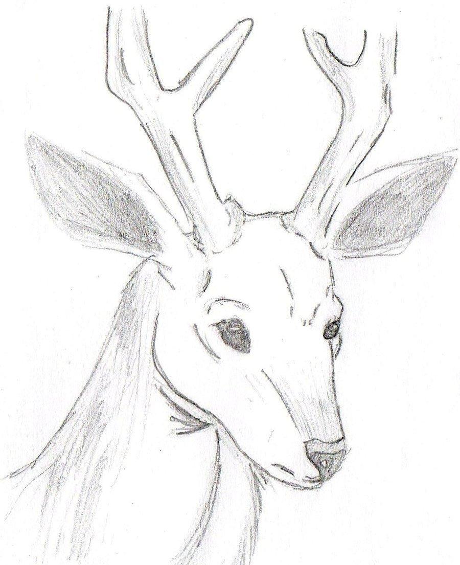 Картинки олени для срисовки