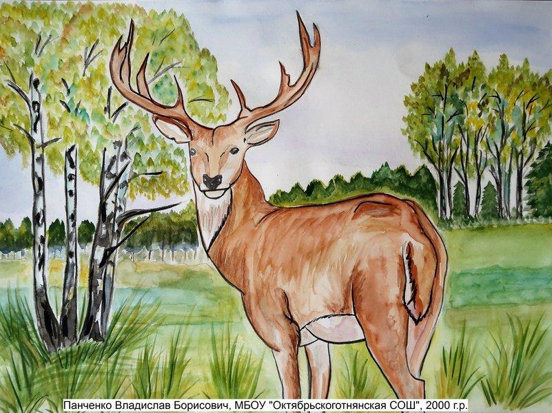каждого нас нарисовать рисунок животные лесов россии входит