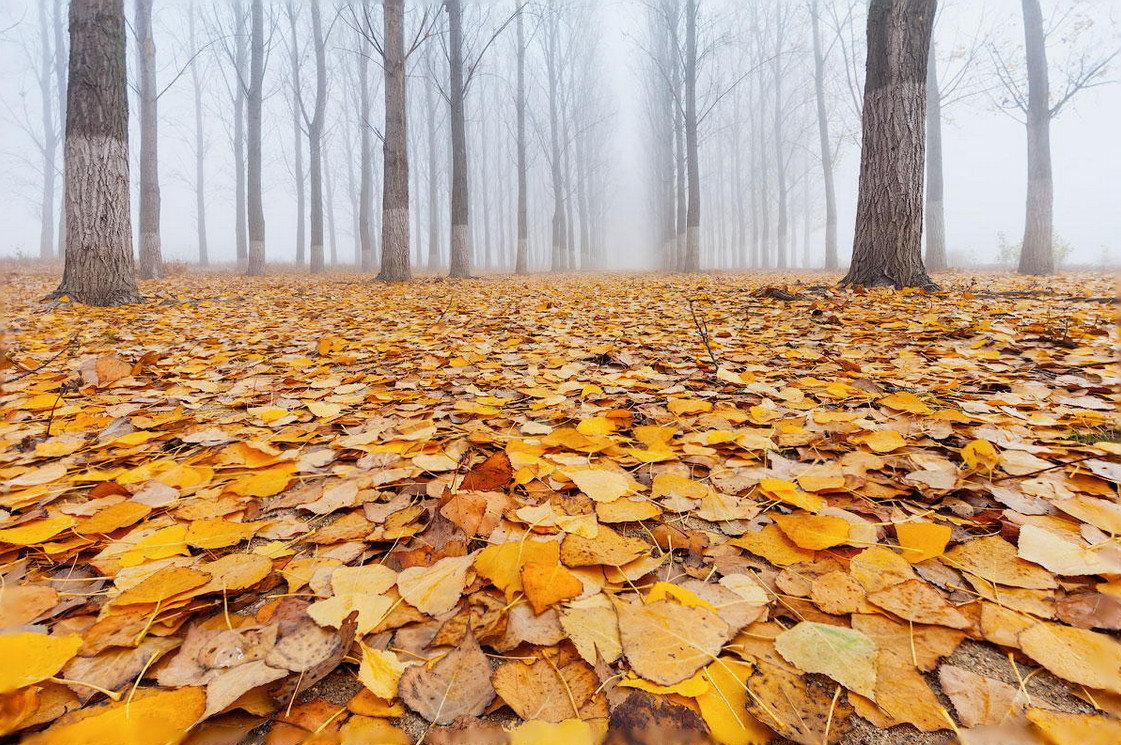 картинки листья опадают листья дизайнеры