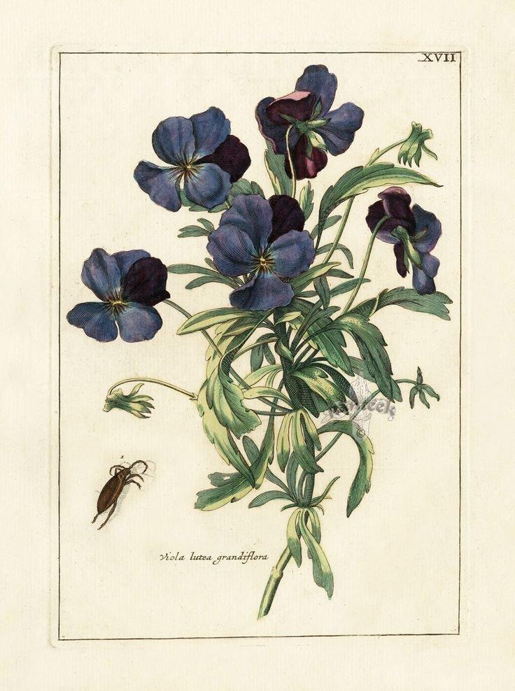 Открытки ботаника, красиво нарисовать открытку