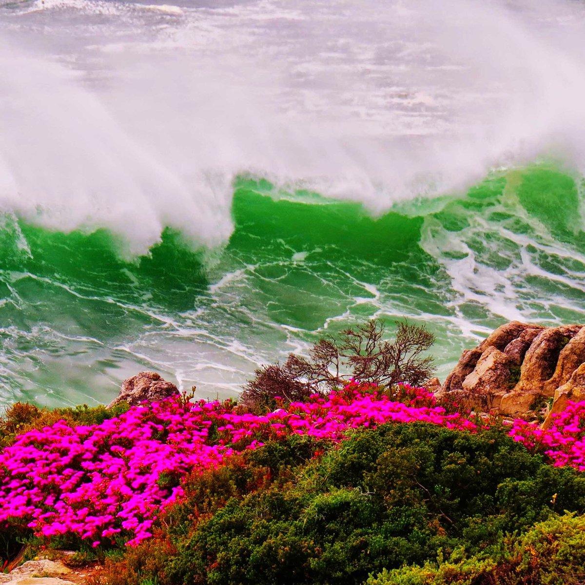 Растения у моря картинки