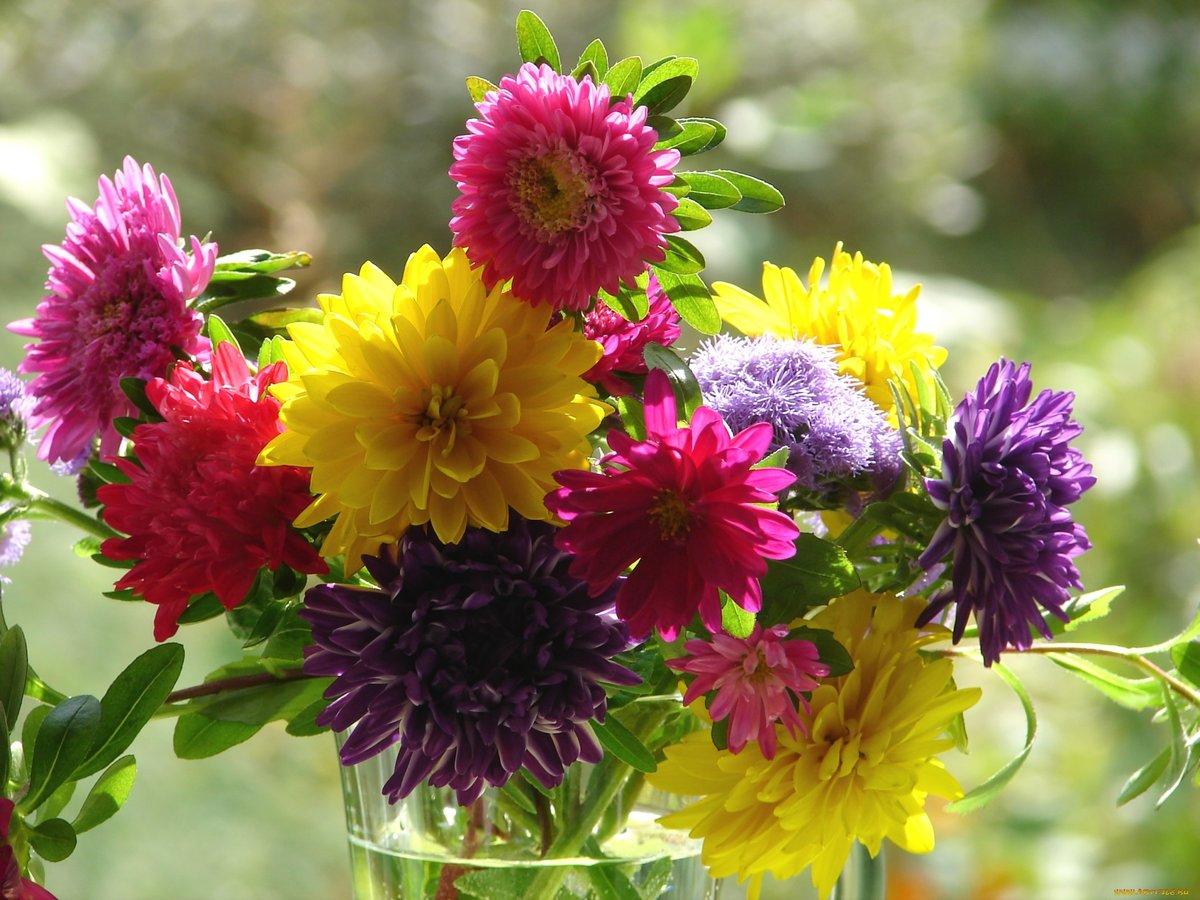 красивые осенние цветы картинки вертикальные цитата