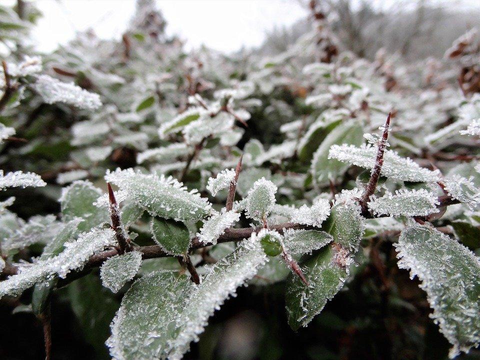 самое красивое фото зимней изморози инея очень нравится техническая